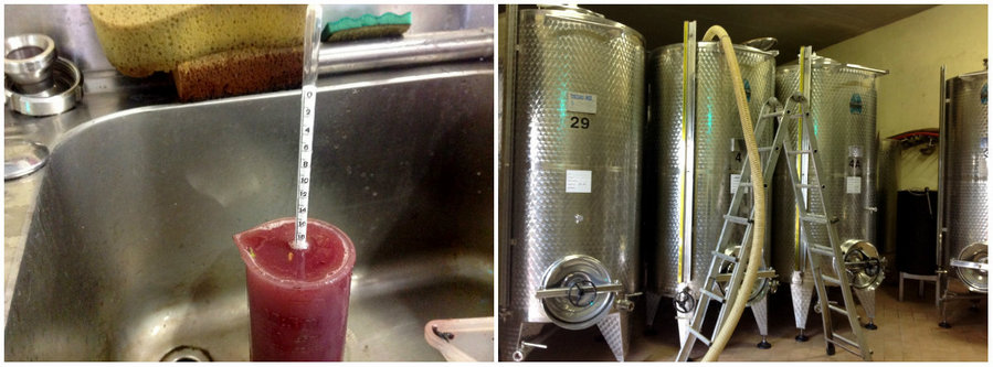 Testing the samples of the crushed Dolcetto grapes from Tre Stelle vineyard; from the crusher to the tanks.