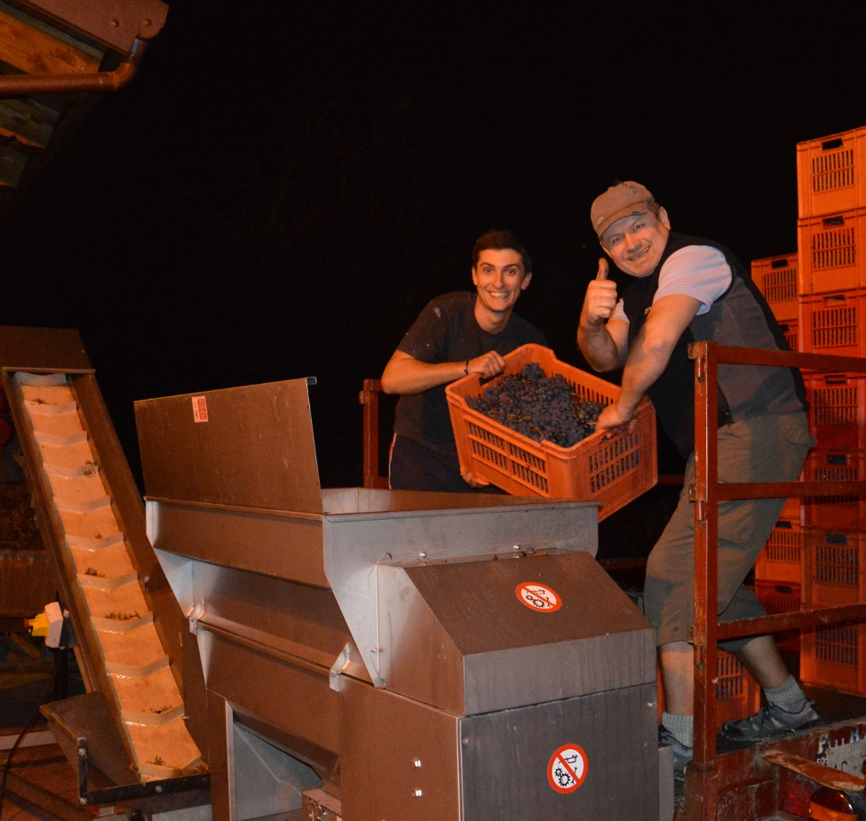 Jon and Kjell doing a little upper body exercise with 22 kg boxes of barbera grapes