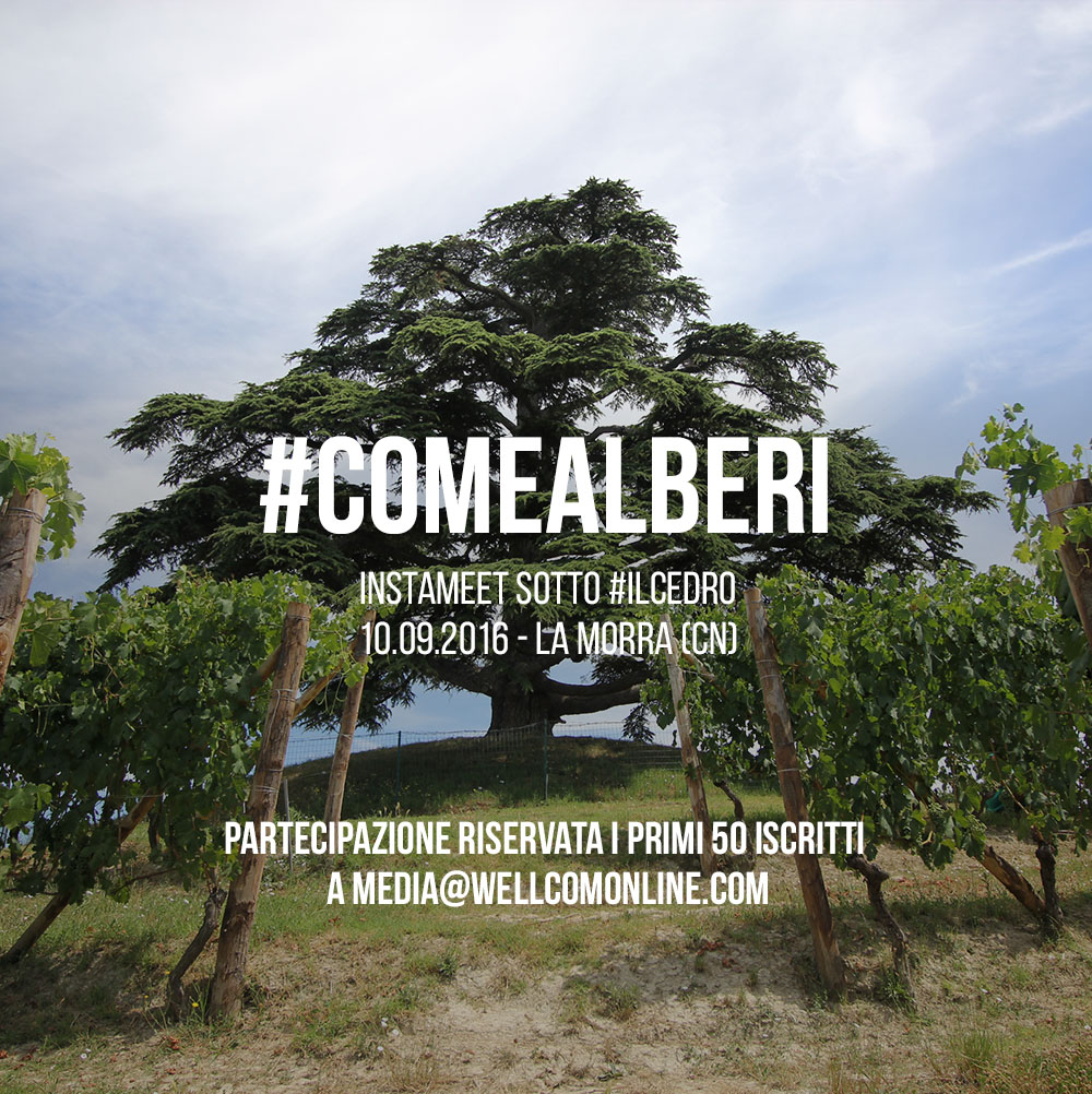 #COMEALBERI Instameet and Photo contest
