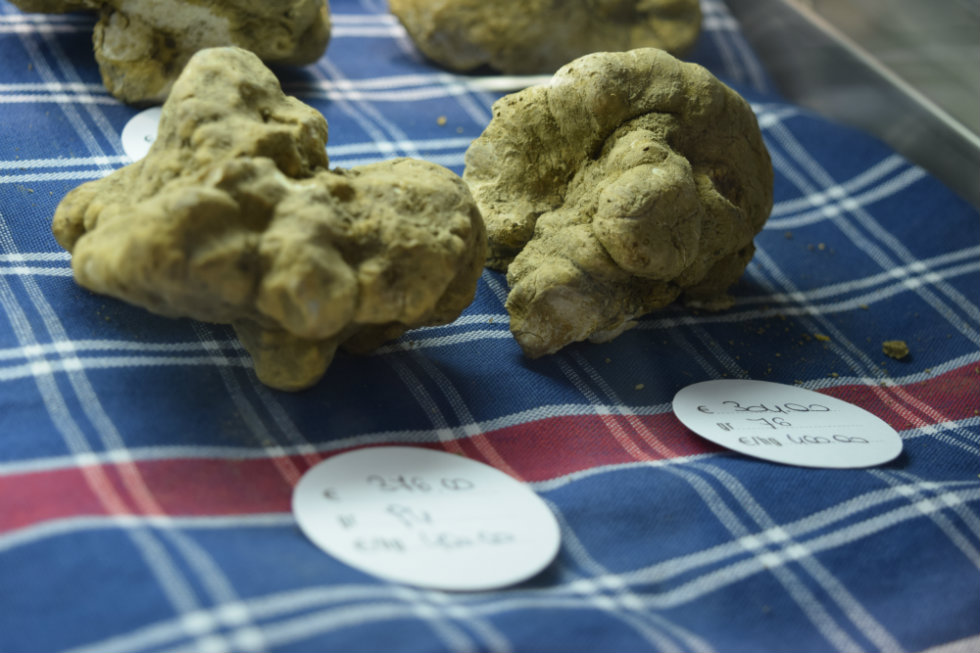 White truffle of Alba. Photo © Julie Sitch