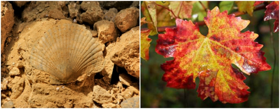 Fossil and autumn leaves in Sarmassa Valley. Photos from www.astiturismo.it and www.nordicwalkingcisa.it