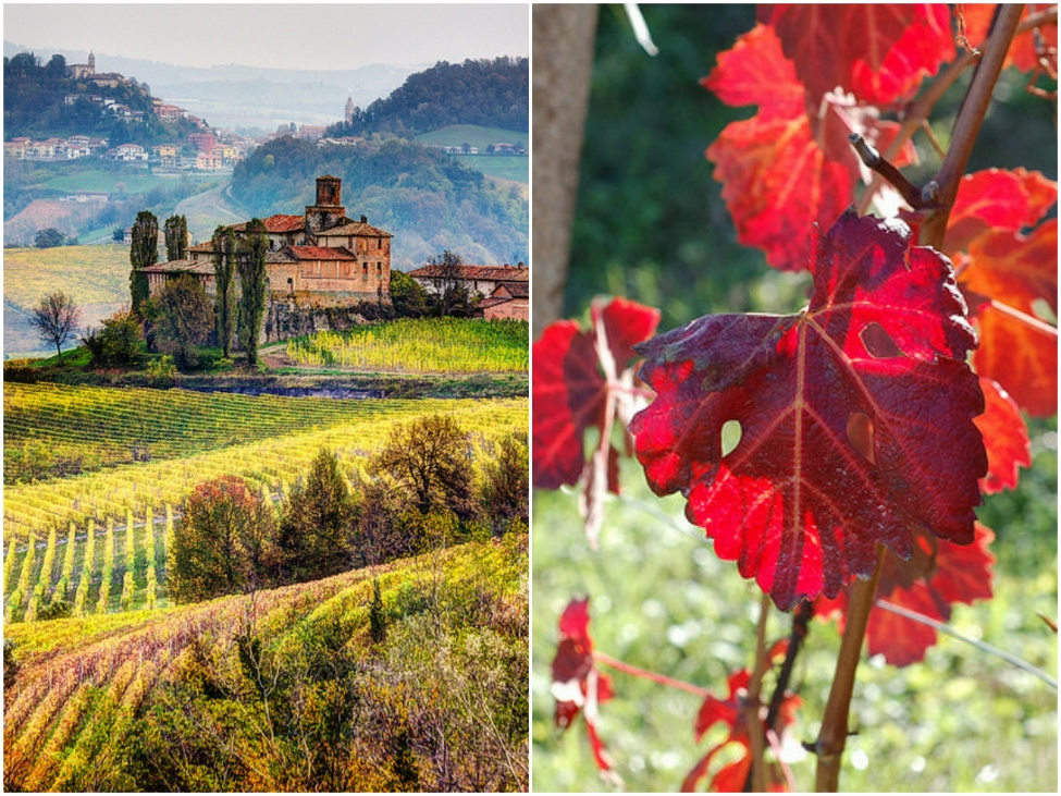 Castello della Volta and La Morra vineyard in autumn