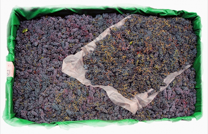 Nebbiolo grapes from Ghemme. Photo from Carlo Olivero
