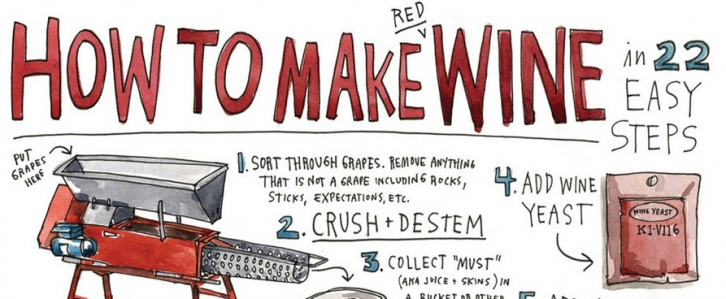 How to Make Wine in 22 Easy Steps - Infographic
