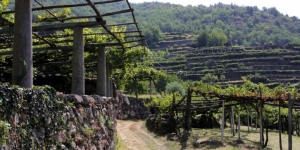 Alpine Wines: the Canavese area