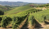 Circling the vineyards of Barbaresco