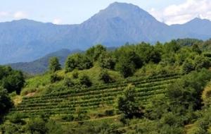 Le cantine dell'Alto Piemonte
