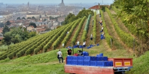 Where to Find One of the World's Last and Oldest Urban Vineyards