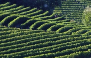 Wineries of Barolo