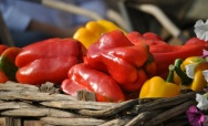 Sagra of the Pepper - August 1-3, Costigliole Motta (AT)