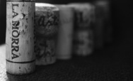 Guided Wine Tastings - Month of December, La Morra (CN)