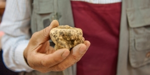 The White Gold of Piemonte is the Alba White Truffle