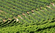 Ancient wine trails
